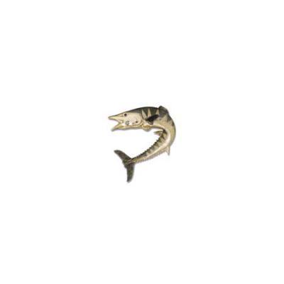 Wahoo with Sapphire Eye and Rhodium Medium White Gold Pendant with Hidden Bail  C323.5WRHSAEHB